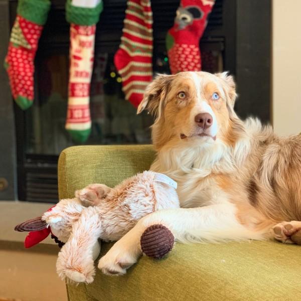 Waiting for Santa can be hard.