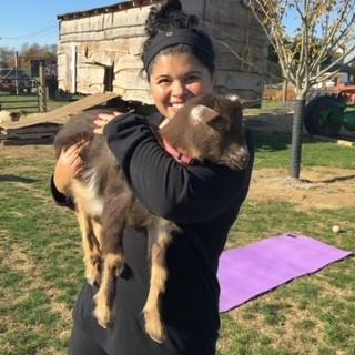 Nicole took a yoga class with goats on a local farm!