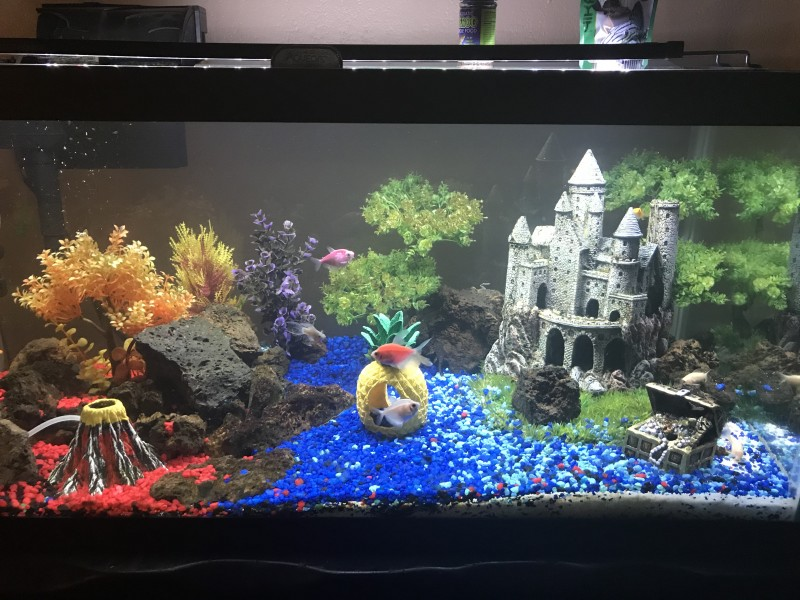 Our fish tank. Working on adding more fish.