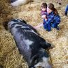 Visiting farm friends