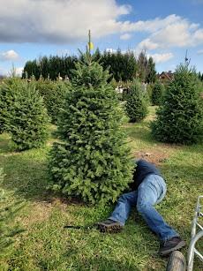 Dada cutting down our tree