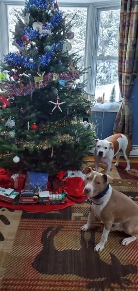 Christmas doggies 2020