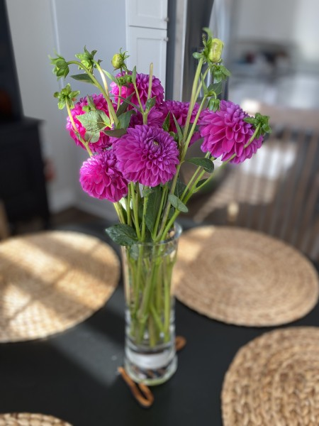 Some thank you flowers from our sweet neighbors in our breakfast nook.