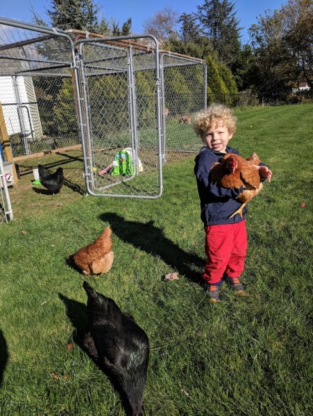 Jackson loves playing with our chickens - and checking for eggs