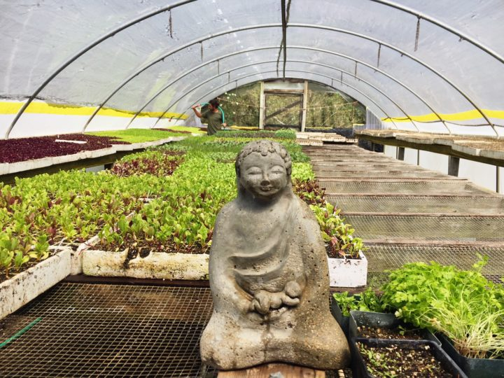 Green Gulch Farm Zen Center Walking Tour