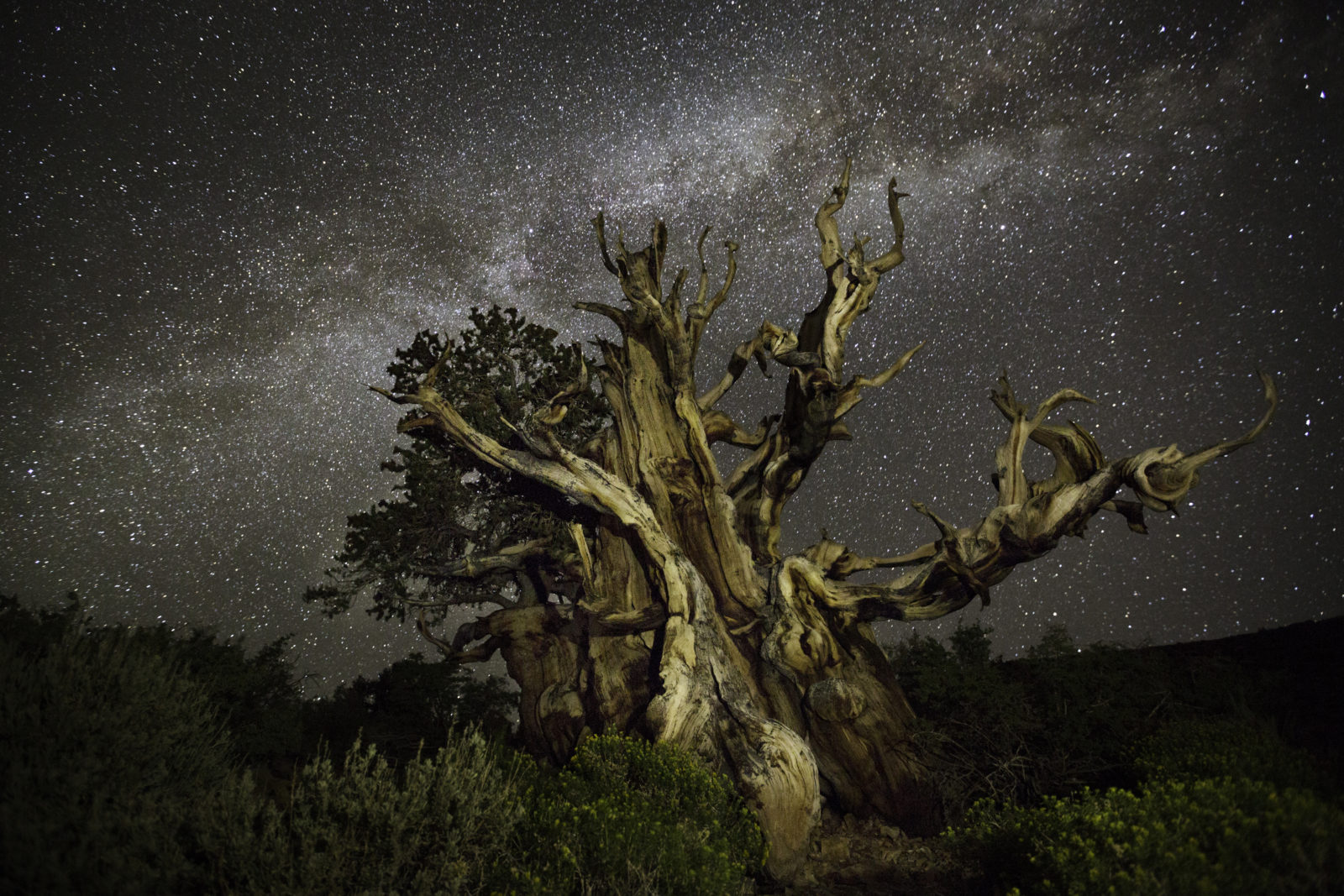Beth Moon: Diamond Nights, California -