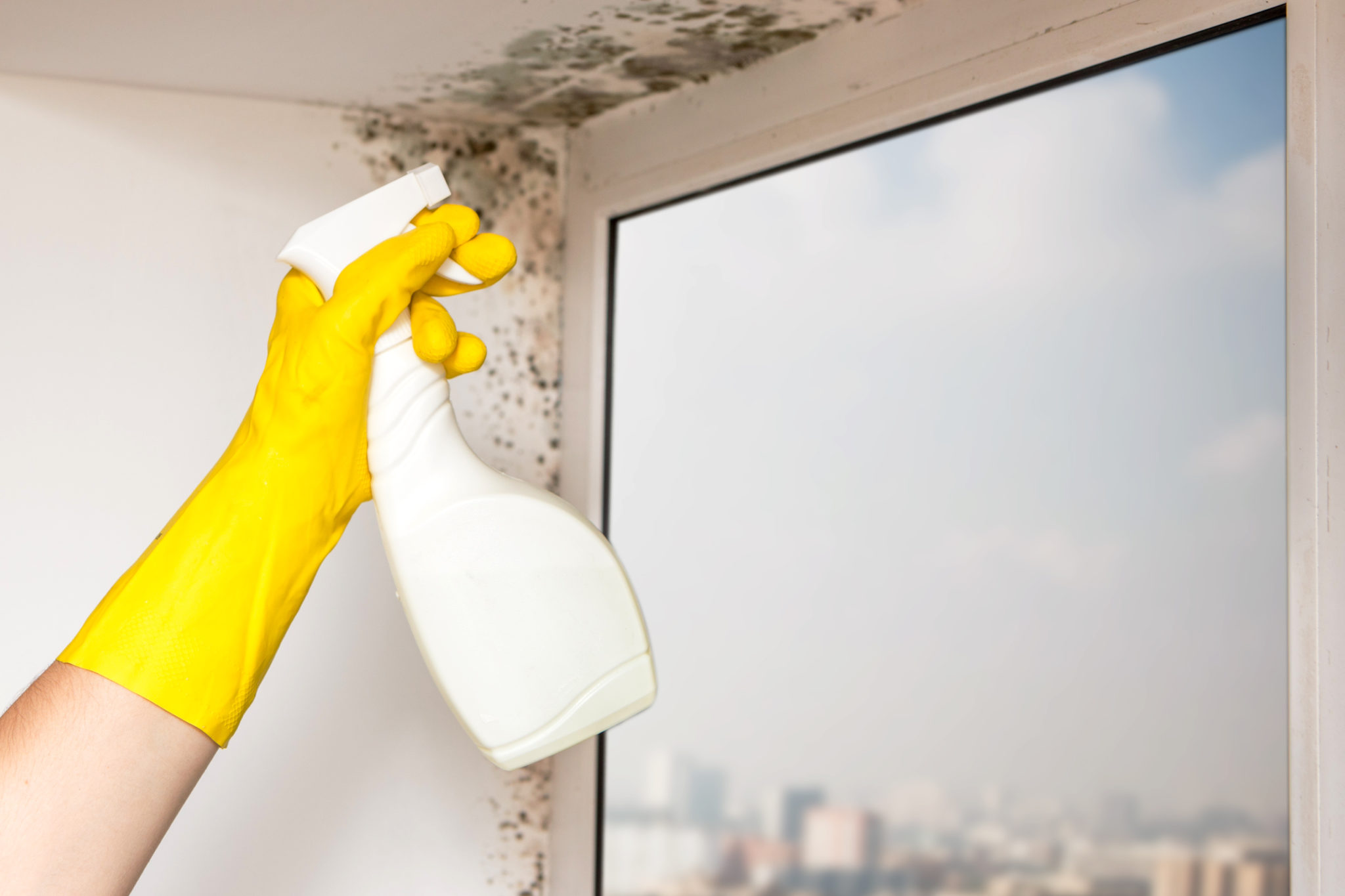 Are You Feeding Your House Mold?