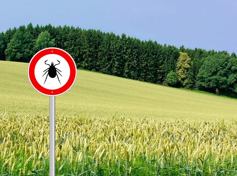 Summer Spotlight: Dealing with Lyme Disease