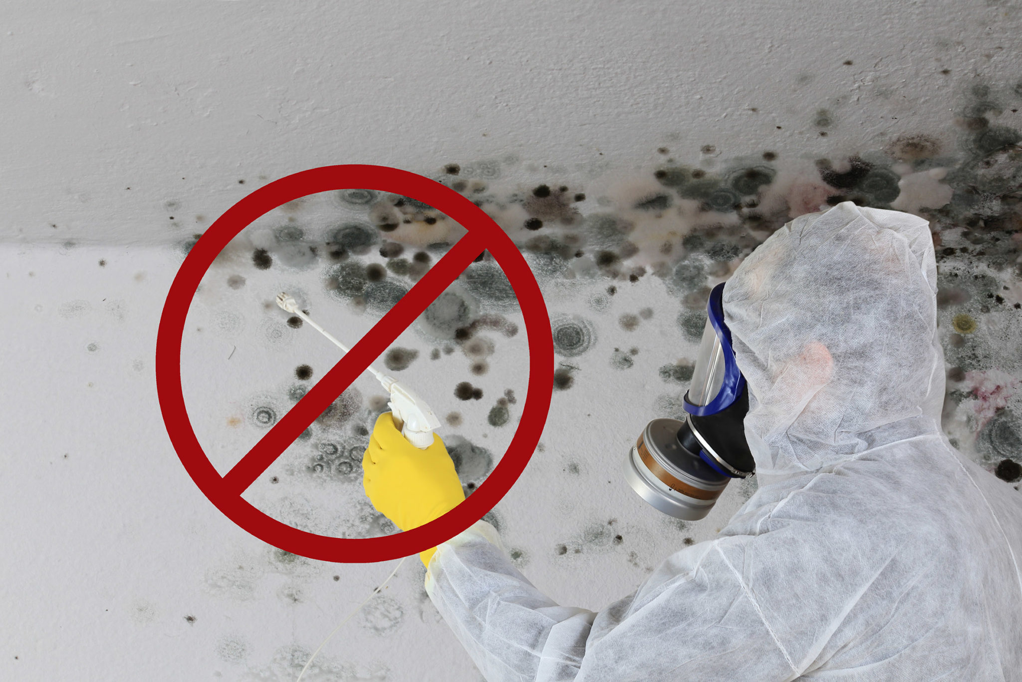 Ask an Expert: Can spraying chemicals remove mold?