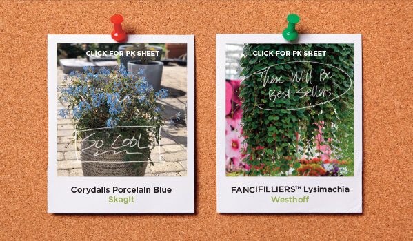 PlantHaven Hot Selection - CAST 2019 Mood Board