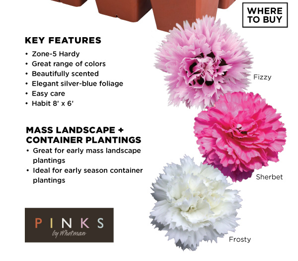 PlantHaven Hot Selection - Pinks by Whetman® EARLY BIRD™ 306 Packs