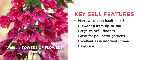 PlantHaven Hot Selection - Weigela Towers of Flowers
