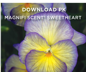 PlantHaven Hot Selection - Scented Beauties