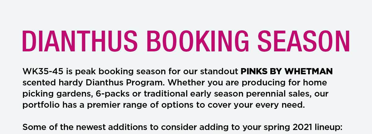 Dianthus booking season
