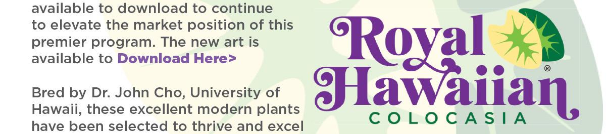 Bold New Art for Royal Hawaiian Colocasia