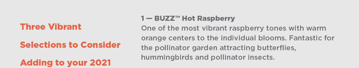 Buddleja BUZZ Hot Raspberry