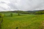 65 Acres +- of Grassland