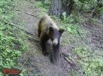 TrailCam bear cub