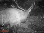 Night trail cam