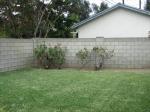 Rear Grassy Area