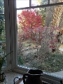 Autumn Colors from Kitchen Window