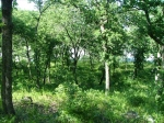 Heavily Wooded Lot 337