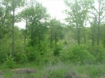 Nicely Wooded Lot 383