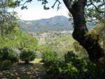 Wild Oak View