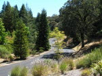 Wild Oak Drive