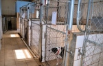 Six indoor outdoor kennels along the back