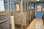 Nine indoor only Kennels