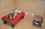 Private suites can accomodate multiple pets