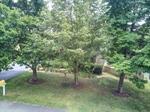 Mature trees provide shade