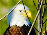 Two bald eagles reside on the property!