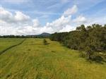 Fescue Field