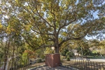 Patio overlooks .82 acre yard and this great Oak