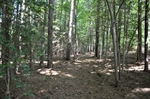Wooded Walking Trails