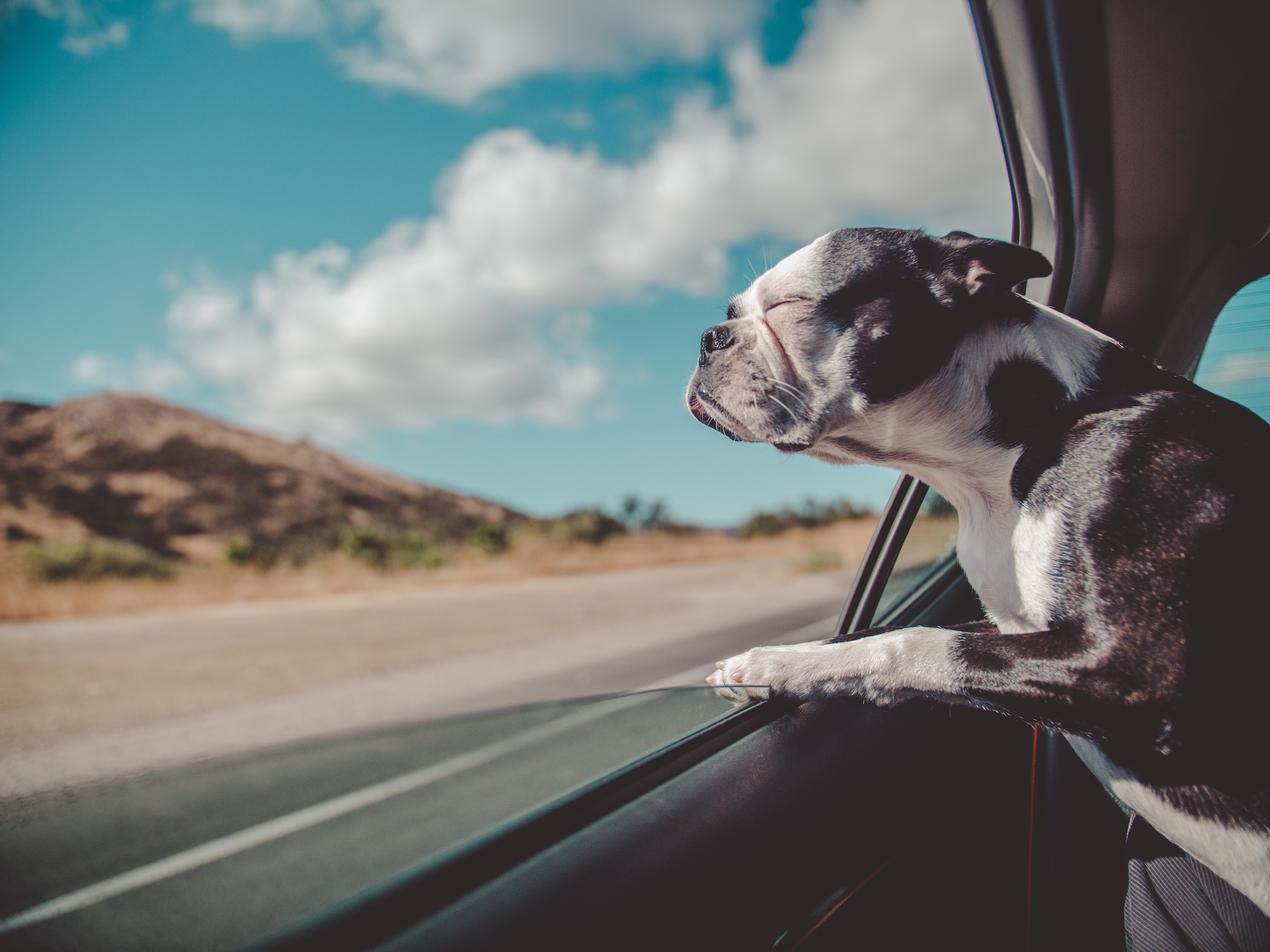 6-Tips-For-Roadtrippin-With-Your-Pets