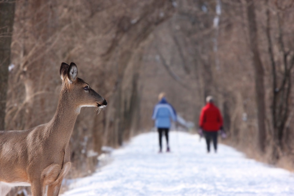 two people walking on a snowy path with a deer in the foreground
