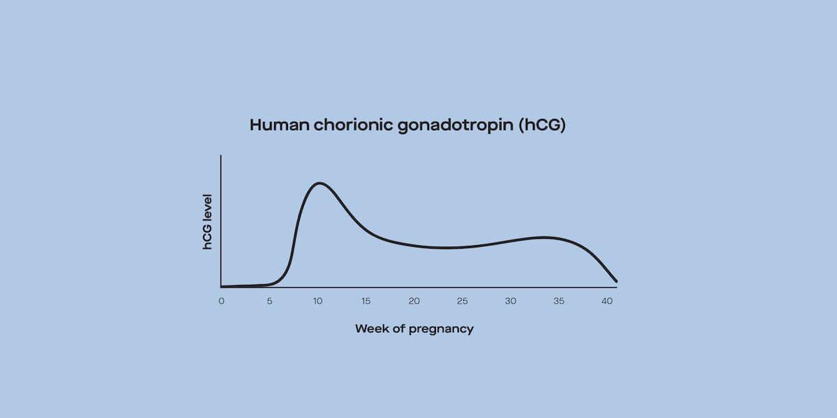 Week levels pregnancy hcg by HCG Levels