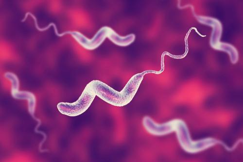 Campylobacter mtime20190225200930