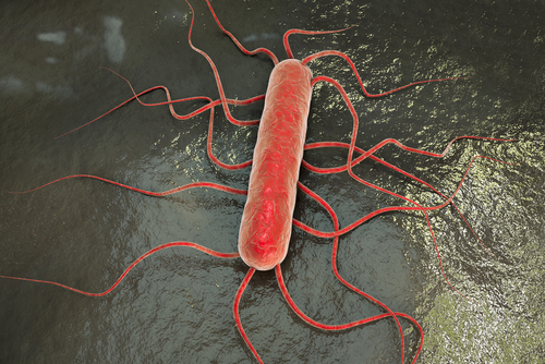 Listeria monocytogenes mtime20190225200932