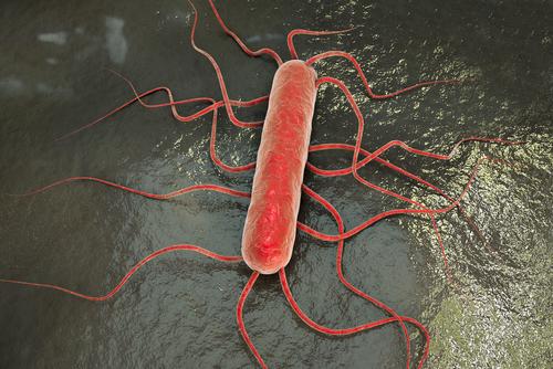 Listeria monocytogenes mtime20190225200932