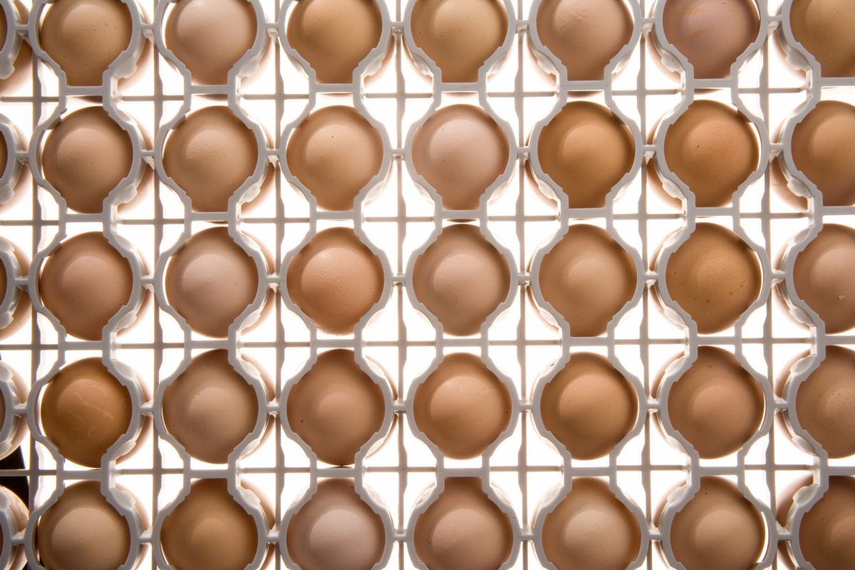 Microban Pas Reform Poultry Industry Egg Safety Hatchery Equipment Smart Tray Egg Incubation