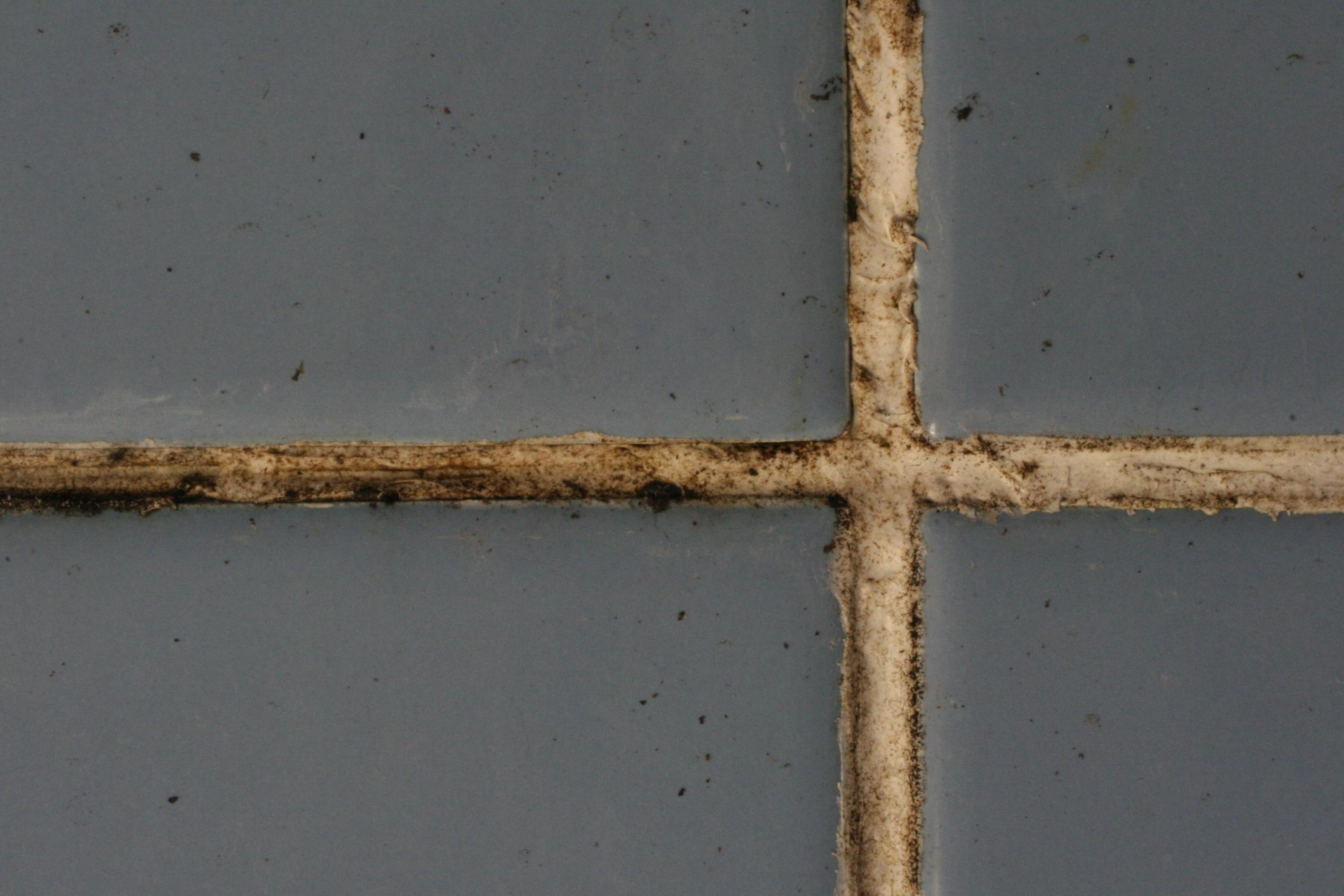 Black Mold in Tile Grout & tile