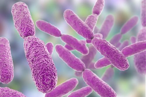 mbns18_Klebsiella Pneumoniae