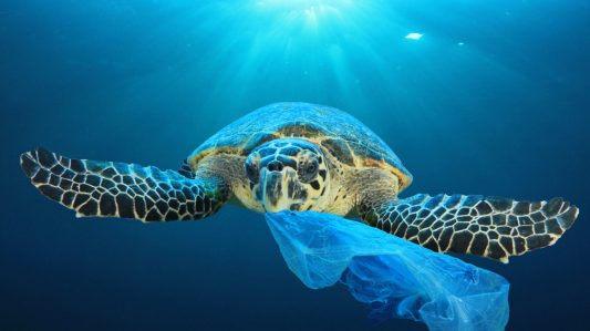 Creating Sustainable Plastic Products with Antimicrobials