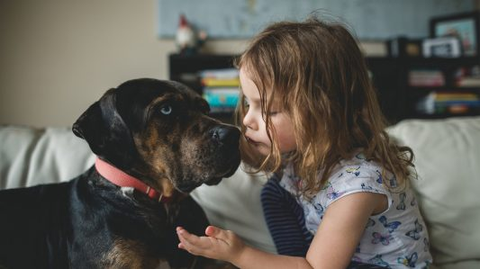 Protecting Your Pet Products From Harmful Microbes – With Antimicrobial Technology