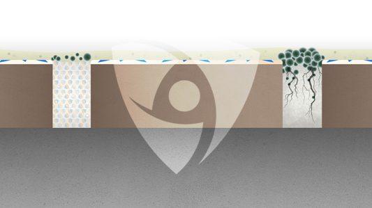 生物膜:可以通過內建抗菌劑預防嗎?