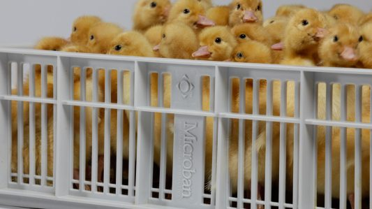 Incubation Equipment: A Proactive Step In The Journey To Egg Safety In The Poultry Industry